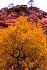 Fall Bouquet (Carl Cohen_Pics) Tags: leaves trees redrocks fall fallcolors westforktrail sedona mountain nature naturephotography canon canon7dmarkii arizona arizonafallfoliage oakcreekcanyon redrocksecretmountainwilderness