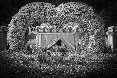 the garden eden couple (sonofphotography) Tags: sonofphotography tsphotoart blackandwhite bw beauty street fashion lifestyle photoart leica flower heart couple garden eden