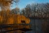 dec27sunrise-16 (bakosgabor57) Tags: frost morning sunrise light water three sky colors natural nikon d7200 1755 f28 grass lake tree sunset wood field park fishing reeds pier