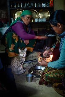 Gurung women preparing food, and cat waiting, Chomrong, Annapurna massif, Nepal