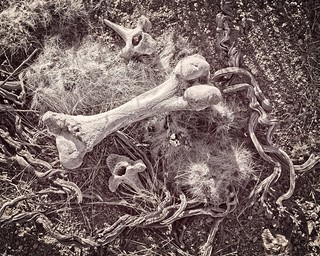 Bones in Desert Flat Lay 5347 C