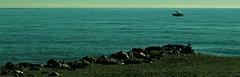 Playa de Poniente en Torre del Mar (portalealba) Tags: torredelmar axarquía málaga andalucía españa spain playa portalealba canon eos1300d 1001nights 1001nightsmagiccity