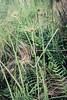 Museu de Arte da Pampulha (Johnny Photofucker) Tags: museudapampulha map bh belohorizonte burlemarx mg minasgerais planta plant pianta paisagismo jardinagem vegetação lightroom 70200mm verde green pampulha