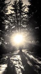 Il neige, à la Terre Pure - 05