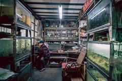 the old aquarium shop 一甲子的水族店 (smallgi photography (smallgi-photography.com)) Tags: