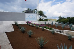 """Agave Plants at Discover Mexico Park • <a style=""""font-size:0.8em;"""" href=""""http://www.flickr.com/photos/28558260@N04/38172830345/"""" target=""""_blank"""">View on Flickr</a>"""