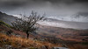 Out in the open .... (Einir Wyn Leigh) Tags: landscape tree winter cold walking mountain snow december wales cymru lines storm cloud weather harsh light exposed fields grass colorful rugged uk nikon