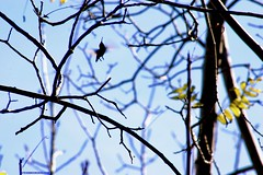"Hummingbird SBK9U • <a style=""font-size:0.8em;"" href=""http://www.flickr.com/photos/95808399@N03/38255046885/"" target=""_blank"">View on Flickr</a>"