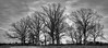 Pittsylvania  House with Trees (Bob G. Bell) Tags: abandoned house tress winter bw sky pittsylvania chatham virginia bobbell