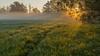 dewdrops at sunrise (ralfkai41) Tags: wiese dewtrops fog tropfen nebel droplets sunrise nature mist waterdrops sonnenaufgang outdoor tau wassertropfen natur tautropfen