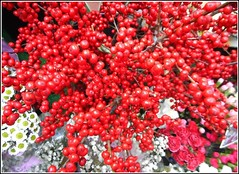 Ilex Berries .. (** Janets Photos **) Tags: uk plants berries red ilexberries hollynature
