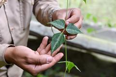 NP-seed regeneration Popayan 23