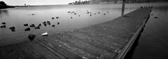 let me take you down (bc50099) Tags: xpan hasselblad 35mm 30mmlens hp5 ilford diafine33 water lake diafine3minutesaandb dock