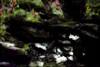 Bajo el árbol (seguicollar) Tags: árbol piedras musgo green imagencreativa photomanipulación art arte artecreativo artedigital virginiaseguí tronco ramas hojas verde bosque