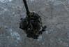171212-A-CG673-0009 (US Special Operations Command Europe) Tags: soceur sof specialoperationcommandeurope fastrope fries osprey cv22 cv22osprey amari harjumaa estonia ee