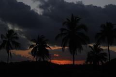 Pôr do sol em Porto de Galinhas (Fernando Starks) Tags: portodegalinhas sunset pordosol coconuttree canon canont3i entardecer árvore céu pôrdosol tropical litoral grama nuvem