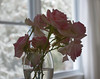 winter bouquet (The Julia) Tags: rose roses pink window flowers stilllife winter