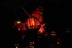 IMG_6488 (comtrag) Tags: jackolanterns rogerwilliamszoo rhodeisland halloween pumpkins pumpkincarving