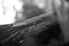 Magic weaver (Connoisseur.Rohit) Tags: spider cobweb web mornings macro nikon d7200 18140 spooky magical weaver
