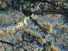 Eye see you (Jwaan) Tags: fish underwater bvi britishvirginislands caribbean westindies sea ocean fisheye rainbow red pupil