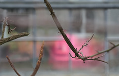 curiosity (Rosmarie Voegtli) Tags: dornach goetheanum gewächshaus greenhouse hothouse pink rosa twigs grid subtlelight ourdailychallenge odc hiking blur curiosity curious