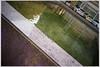 M9-1049353 (Giacomo Pagani) Tags: giacomo pagani giacomopagani leica camera ag m9 full frame ccd rangefinder telemetro 2017 voigtlander 35 mm f25 color skopar