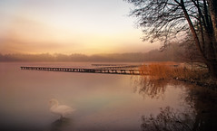 Waiting for the winter. (augustynbatko) Tags: lake pier bridge fog nature sky clouds bird swan water tree trees landscape sunset forest mist