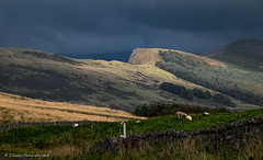 Rain Approaching (Fermat48) Tags: mamtor peakdistrict derbyshire castleton rain clouds sheep drystonewall sun light shaft shadows grass canon eos camera 7dmarkii hillside