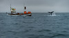 Iceland, Husavik, Whale Watching (Clever Photons) Tags: whale iceland husavik stormy dive watching humpback