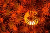 Fireworks (Olivier Simard Photographie) Tags: feudartifice paterno sicile italie graphique abstrait lampe artmoderne étude orange fireworks sicily italy graphic abstract lamp modernart study opticalillusion