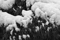 First Snow Ohhh Nooo (Thomas Pohlig) Tags: snow jersey jerseyshore home blackandwhite blackandwhitephotography monochrome mono winter