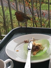 Robin at Coffee Shop with Mince Pie (Kay Prothero-John, Dec 17)