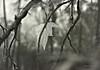 Falling Leaves ... (MargoLuc) Tags: leaves tree autumn mood monochrome bokeh light sunset backlight bw branches