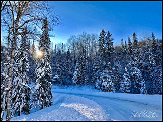 Toile d'hiver