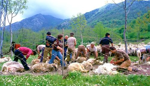 Fiori Bagnoli Irpino : Flickriver: most interesting photos from bagnoli irpino campania italy