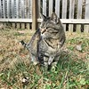 """""""Art is the reason I get up in the morning, but the definition ends there. It doesn't seem fair that I'm living for something I can't even define."""" ―Ani DiFranco 🐈 (anokarina) Tags: appleiphone7 highlands louisville kentucky ky animal kitty kitten wooden fence"""