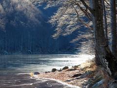 PC080358 sole e ghiaccio (La Patti) Tags: hiking dicembre december autunno autumn rami branches light colori colors nature natura
