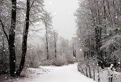 Sotto la neve (Marco Allegro) Tags: