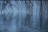 Lungolago, Mantova (pepolino) Tags: inverno winter lago acqua lungolago mantua lake water mantova mincio sunset vegetation