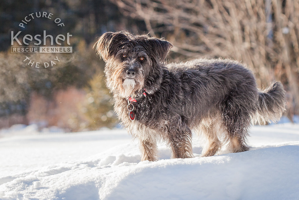 Large Breed Dog Rescue Ontario Canada