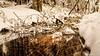Neige du 28/12/2017 - 03 (Lцdо\/іс) Tags: lцdоіс fagnes fagnard winter belgique belgium belgie belgian décor venn venen hohes hoge hautesfagnes nature réserve naturelle parc park national barraque michel botrange waimes wallonie wallonne région liège province promenade
