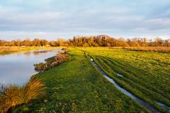 River Wey at Walsham Meadow-EC290225 (tony.rummery) Tags: em10 evening eveningsun mft microfourthirds nationaltrust omd olympus pyrford riverwey towpath winter woking ripley england unitedkingdom gb