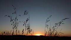 Sunset (comin.fernando) Tags: sunset pordosol finaldetarde entardecer fernandoc riograndedosul fernandocomin