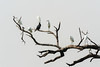 ©Shahid Hashmi (Shahid Hashmi) Tags: art asia asian colorful fineart india indianphotographs onebird orient rajasthan rajasthanindia rajasthaniphotographs royal shahid shahidhashmi shahidhashmiphotography trees birdsondrytree drytrees