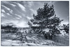 2018-01-03 3/365 Tobogganing hill with tree (Rick McCutcheon) Tags: 365the2018edition 3652018 day3365 03jan18 100xthe2018edition 100x2018 image3100 nikon silverefexpro2 d750 nikon1735f28d ontario