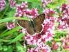 Butterfly 1550 (+1000000 views!) Tags: butterfly borboleta farfalla mariposa papillon schmetterling فراشة