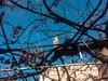 Basking in the sun (SleepSerum114) Tags: tbilisi cat vine grapevine vineyard pergola alley