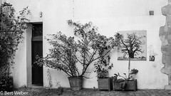 Unbenannt (weber.bert) Tags: 169 paris f analogefotografie blackwhite inbiancoenero noiretblanc france grauwertabstufungen sw