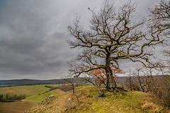 valley 's keeper (Thos A.) Tags: tree oak winter sky clouds landscape arbre chêne ciel nuages bourgogne burgundy yonne canon eos eos80d paysage