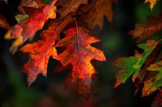 Fall's Flirty Foliage